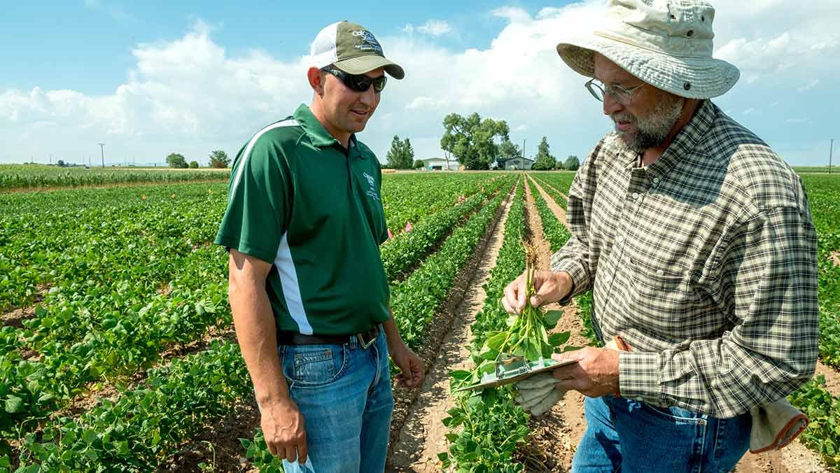 Agrarische sector veredeling