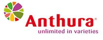 Anthura