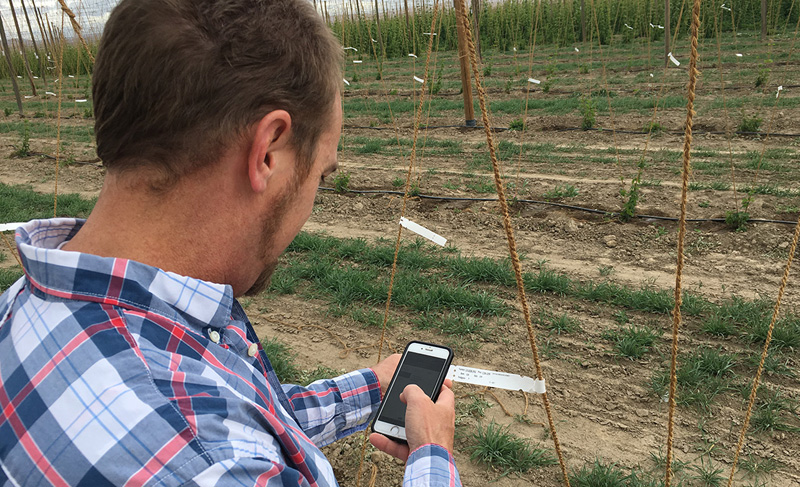 Plant Breeding Software used by Michael - Hops breeding